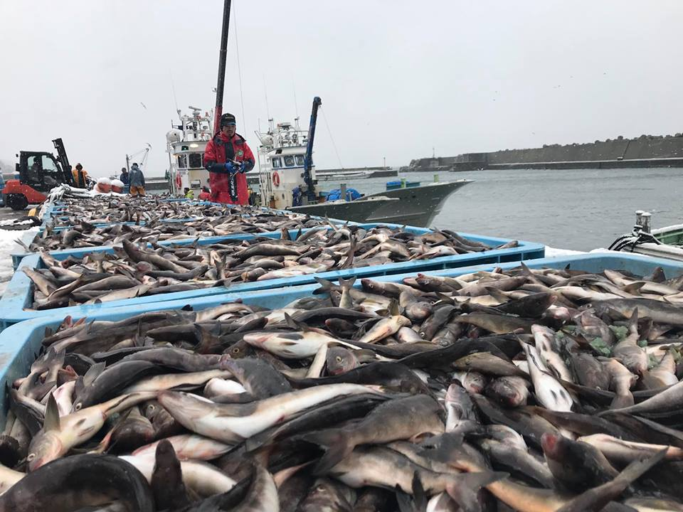 >こだわりの活〆鮮魚を全国へご提供しています